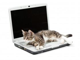 Little tabby kitten lays on a laptop