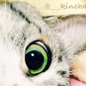 kinchan03