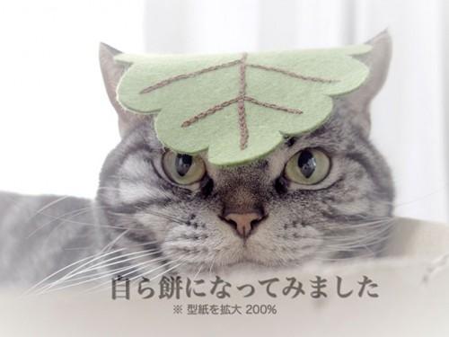 kashiwamochi02