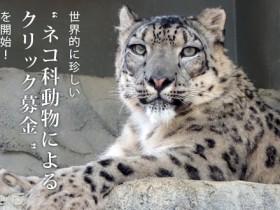 yukihyo