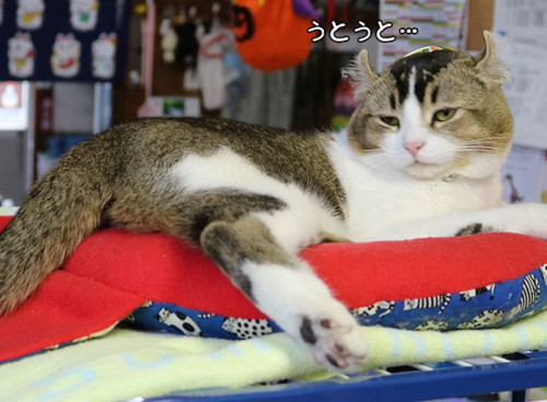 ashinomaki19