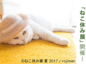 nekoyasumi