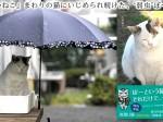 yasashiineko