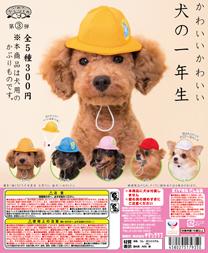 dogcap_dp