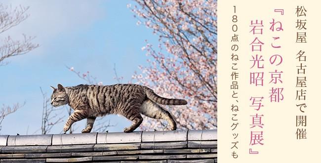 iwagoumitsuaki_tit