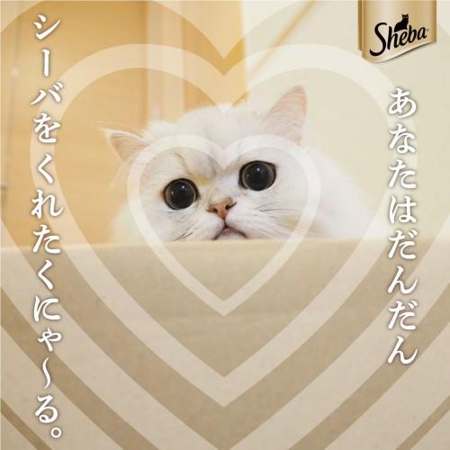 sheba_mejikara04