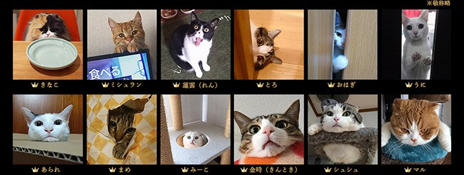 sheba_mejikara09